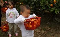 上海农家乐-南汇农家乐